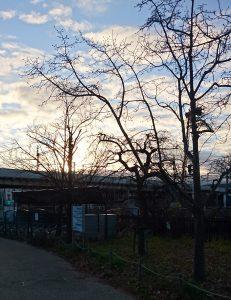 梅小路公園の初日の出